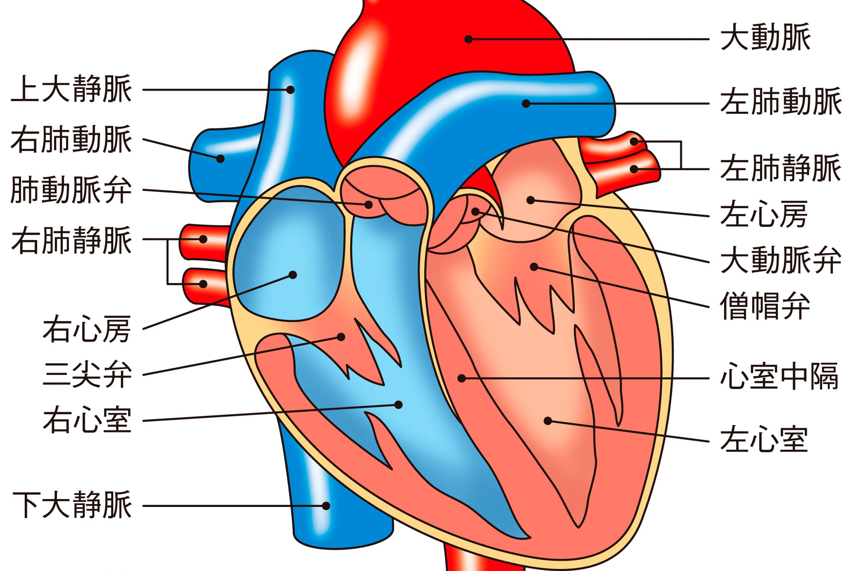 犬の心臓病を放置した場合のリスク 名古屋で心臓病の名医が解説